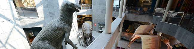 """Vorschulkinderkurs """"Natur erleben"""" im Naturkundemuseum"""