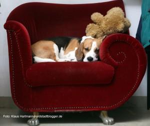 Kino im Depot, Sweet Sixteen Kino Hund Henry nimmt es gelassen