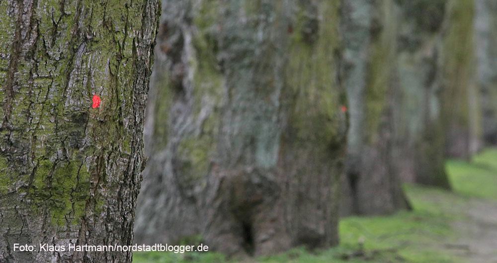 Baumfällarbeiten im Fredenbaumpark