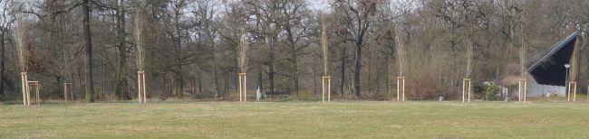 Die Pappelallee im Fredenbaumpark steht wieder