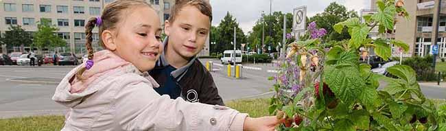 """""""Garten statt ZOB"""" feiert am Samstag Geburtstag: Der Guerilla-Garten in der Nordstadt besteht seit fünf Jahren"""