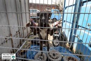 Auch einen Schrottplatzhund hatten die Initiatoren übernommen.