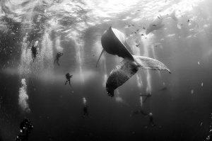 Anuar Patjane Floriuk, Mexico, 2015, Whale Whisperers