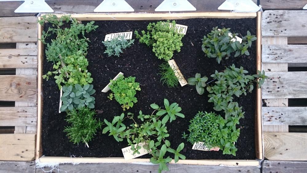 Die Urbanisten haben für den Sommer am U einen Garten gestaltet. Foto: Florian Kohl
