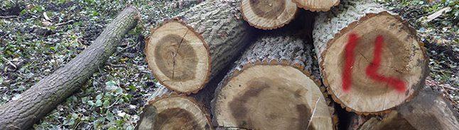 Nordstadt: Kahlschlag im Brügmanns Hölzchen – Leise, still und heimlich sind dutzende Bäume im Hoeschpark gefallen