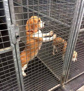 Statistisch werden jeden Tag drei neue Tiere durch das Tierheim aufgenommen. Davon wird ein Tier wieder abgeholt, zwei Tiere werden täglich durch uns an Familien neu vermittelt.