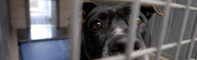 """Tag der offenen Tür im Tierschutzzentrum in Dortmund-Dorstfeld mit Schwerpunktthema """"Hundehandel im Internet"""""""