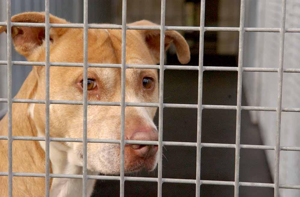 Das Tierheim zur Aufnahme heimatloser Haustiere startete mit einer Aufnahmekapazität von 150 Tieren . Foto: Alex Völkel