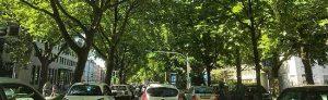 Der Wallring ist grün. Doch drei Viertel aller Bäume sind Rosskastanien. Die meisten sind erkrankt.