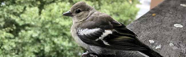 HINTERGRUND: Was tun mit verletzten Wildtieren? Tierschutzorganisationen und Ärzte können helfen