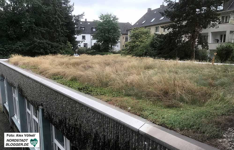 Dachbegrünungen können haben positive Auswirkungen auf das Mikroklima haben. Foto: Alex Völkel