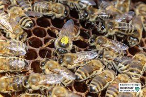 Für Bienen gibt es immer weniger Flächen. In Scharnhorst soll sich das ändern.