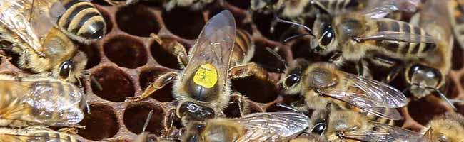 ImkerInnen im Nordosten sind auf der Suche nach Flächen für Bienenweiden – Das Geld für das Vorhaben ist vorhanden