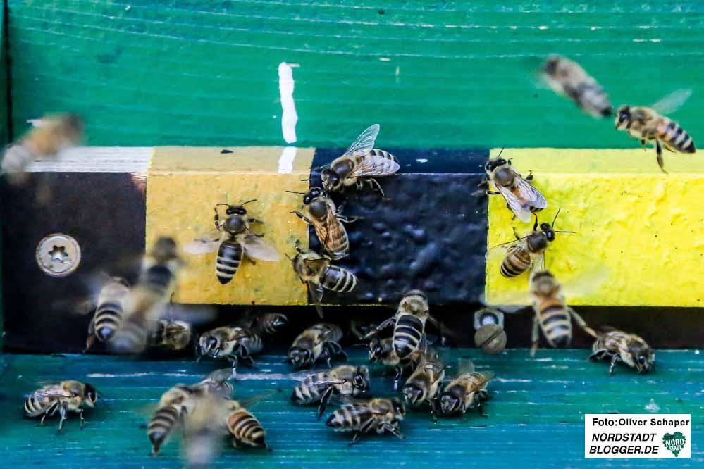 Bienen sorgen nicht nur für Honig, sondern spielen eine entscheidende Rolle für das Pflanzenwachstum.