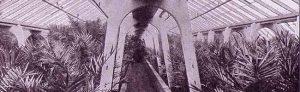 Gewächshäuser der Gärtnerei Stoffregen, 1927, aus der Jubiläums-Preisliste