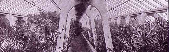 SERIE Nordstadt-Geschichte(n): Erinnerungen an die Großgärtnerei Stoffregen – Palmen von der Münsterstraße