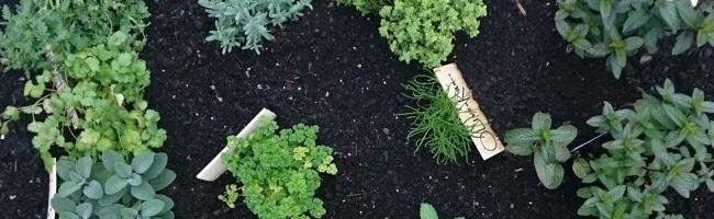 Selbstversorgt mit dem eigenen Garten: Autorin aus Dortmund zeigt, wie es geht – Buchvorstellung im Studio B
