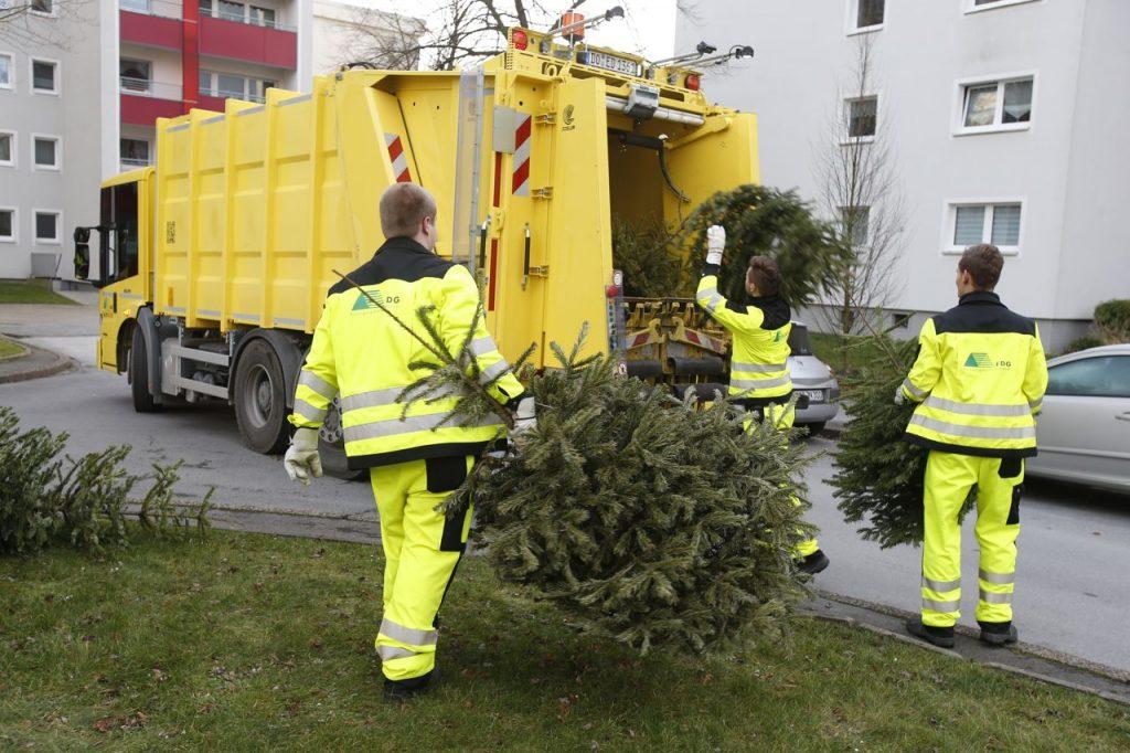Die EDG sorgt wieder für die Entsorgung von Weihnachtsbäumen.