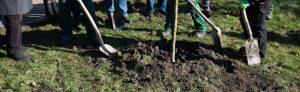 Pflanzung Koribiniansapfelbaum Fredenbaumpark