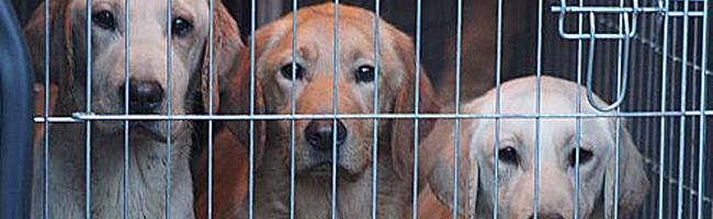 Das Tierheim in Dortmund zieht Bilanz: Über 1000 Tiere wurden aufgenommen und 676 von ihnen neu vermittelt
