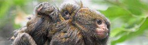 Vater Leonardo kümmert sich um die beiden Jungtiere. Fotos: Frauke Wichmann.
