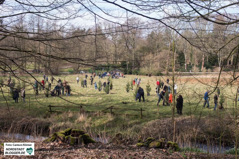 Pflanzung der Mammutbäume im Rombergpark Dortmund.