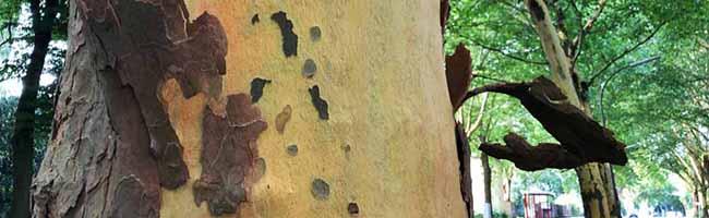 Große Trockenheit: Die Stadt Dortmund bittet um Mithilfe beim Wässern vor allem der jungen Straßenbäume