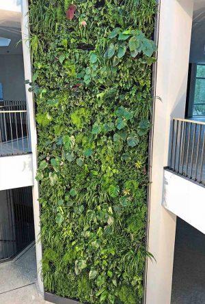"""Wächst üppig: die """"Grüne Wand"""". 20 verschiedene Pflanzen wachsen auf dem vertikalen Garten. Fotos: Joachim vom Brocke"""