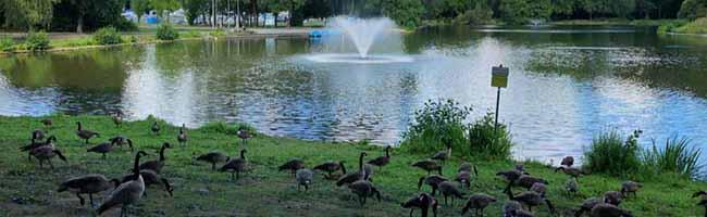 Zwei Millionen Euro Investition: Das Grünflächenamt will den Fredenbaumpark nicht nur sprichwörtlich aufblühen lassen