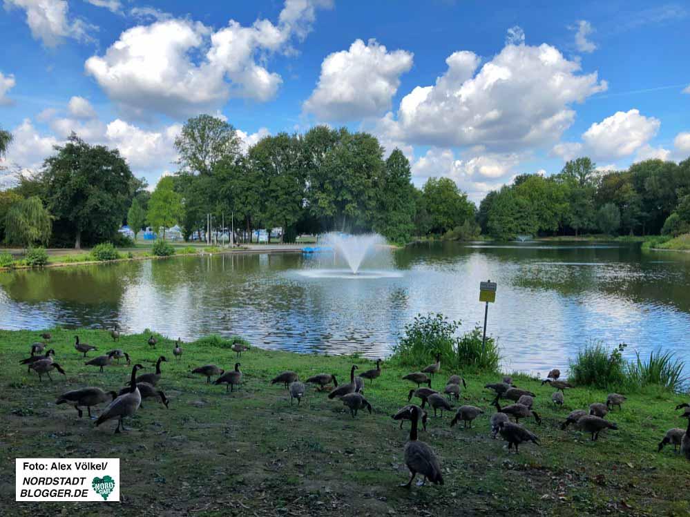 Der Freundeskreis kümmert sich seit 25 Jahren um die Attraktivierung des Fredenbaumparks. Foto: Alex Völkel