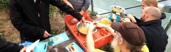 Landwirtschaft und Klimawandel: Umweltamt Dortmund verteilt frei nutzbares Saatgut statt steriler Hybride
