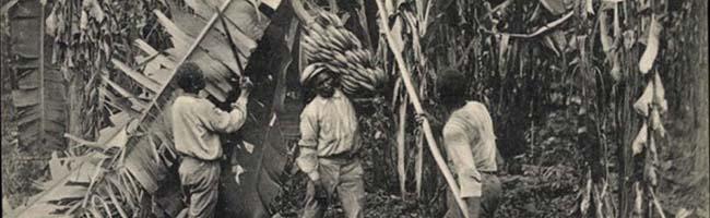 """""""Neu-Dortmund"""" in Honduras um 1900: Bananenanbau, Kolonial-Phantasien und geplatzte Träume vom schnellen Geld"""