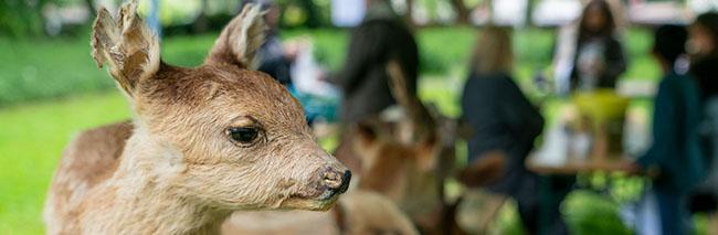 """Weg vom Smartphone und raus in die Natur! Kinder lernen bei der """"Erlebnistour Fauna und Flora"""" die urbane Natur kennen"""
