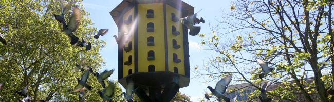 Der Tierschutzverein will eine Tauben-Futterstelle einrichten, um in der Nordstadt die Population zu reduzieren