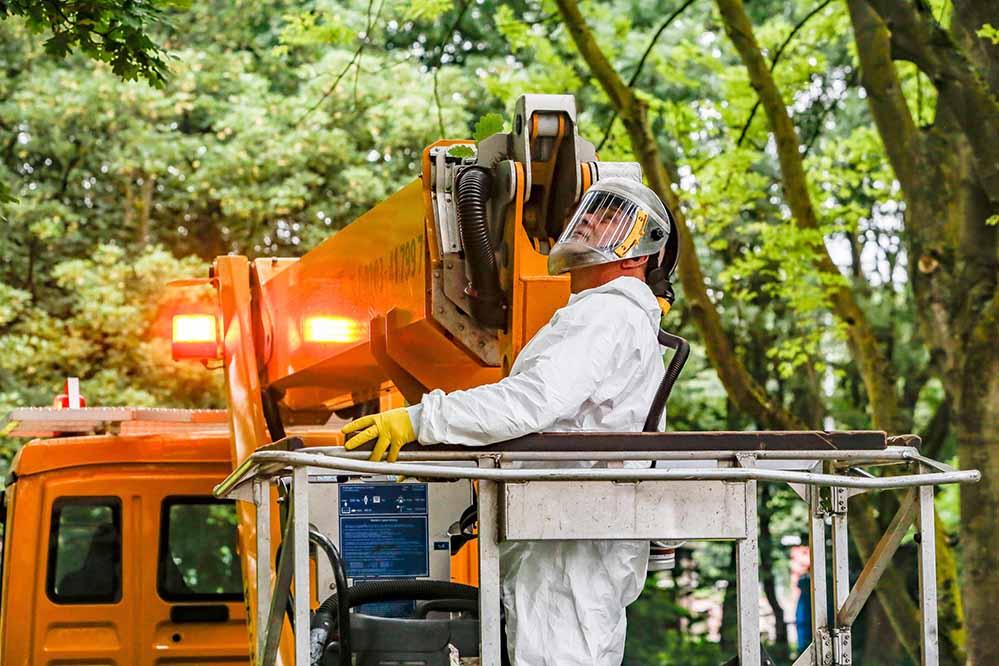 Spezialfirmen haben derzeit alle Hände voll zu tun, den massiven Befall durch Eichenprozessionsspinner zu beseitigen. Sie sind eine Folge des Klimawandels.