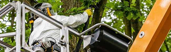 Gefährliche Plagegeister: Dortmund geht jetzt konsequent gegen die Raupen des Eichenprozessionsspinners vor