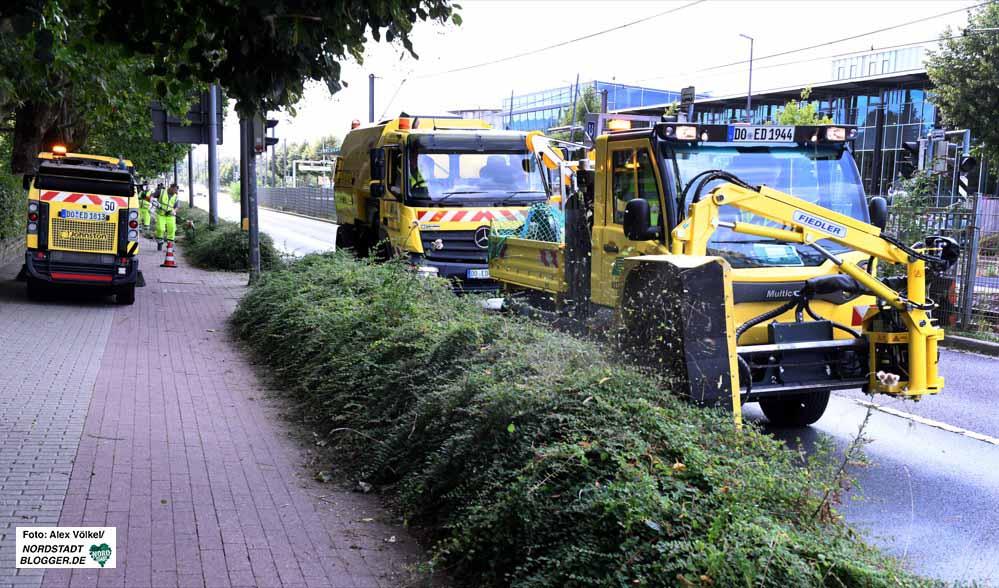 Die EDG hat in diesem Jahr die Pflege des Straßenbegleitgrüns vom Tiefbauamt übernommen. Fotos: Alex Völkel