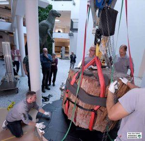 Im Erdgeschoss wuchteten Experten an einem 210 Millionen Jahre alten versteinerten Baumstamm, der alleine 2,8 Tonnen auf die Waage brachte.