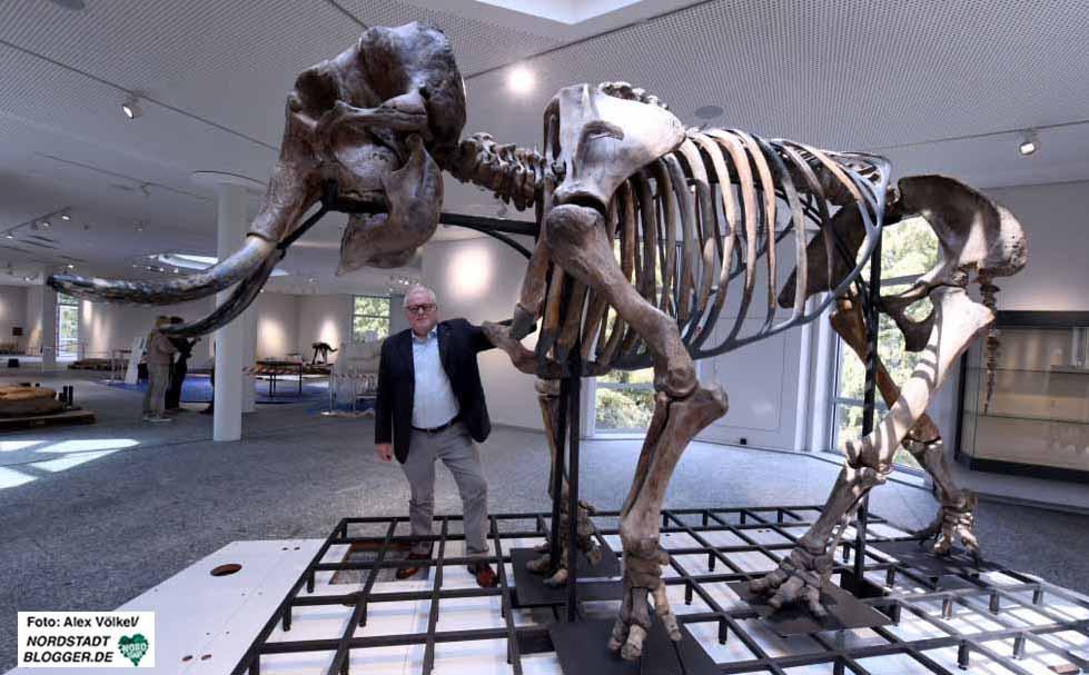 Mammut-Experte Dick Mol hat die über 200 verschiedenen Knochen aus zahlreichen Einzeltieren zusammengesetzt.