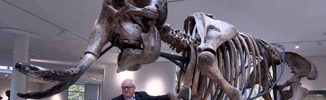 Wollhaar-Mammut-Skelett steht in der Nordstadt: Nächsten Sommer gibts ein neues Naturkundemuseum in Dortmund