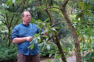 Dr. Patrick Knopf, Direktor Botanischer Garten Rombergpark, präsentiert die Dortmunder Zukunftsbäume. Foto: Thomas Engel