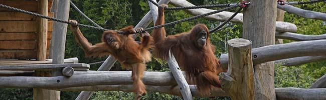 Zootiermedizin trifft Humanmedizin: Erfolgreiche Kooperation für das Tierwohl auf vielen Gebieten im Zoo Dortmund