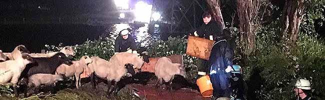 Dramatische Tierrettung in Dortmund Persebeck –die Feuerwehr rettete 330 Schafe vor dem Ertrinken