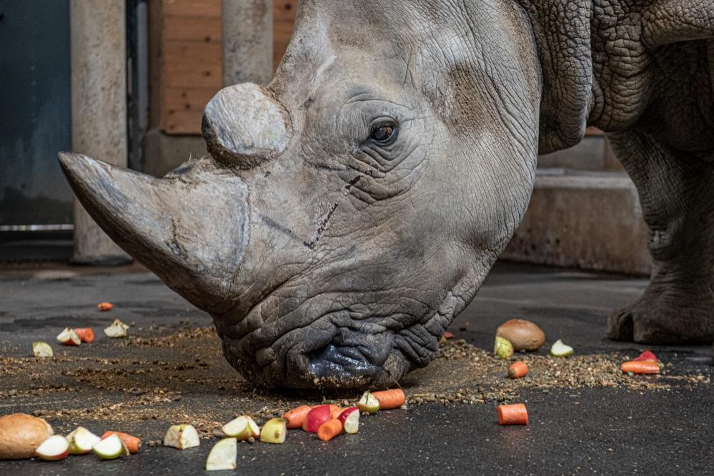 Geburtstagsparty für Natala im Dortmunder Zoo. Bild: Roland Gorecki/Dortmund-Agentur