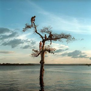 A group of boys climb a tree on the Xingu River by the city of Altamira, Brazil. One third of the city will be permanently flooded by the nearby Belo Monte Dam. Foto: Vincent Elkaim