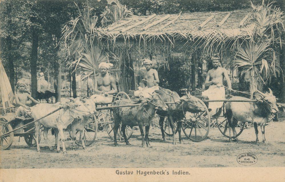 Hagenbecks Indien-Schau: Wagenrennen (Sammlung Klaus Winter)