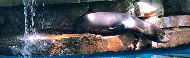 Neubau der Robbenanlage im Dortmunder Zoo soll viele Vorteile für Tiere schaffen und Besucher*innen anlocken