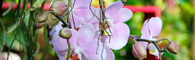 """Neue Orchideenschau im Botanischen GartenRombergpark mit """"Aussichten und Einblicken"""" in Zeiten des Klimawandels"""