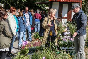 Herbstmarkt und Kastanienfest im Rombergpark Foto Schaper Blumen und Dekorationsstände luden die Besucher*innen zum Kaufen ein. Oder man konnte sich Iden für den eigenen Garten holen.