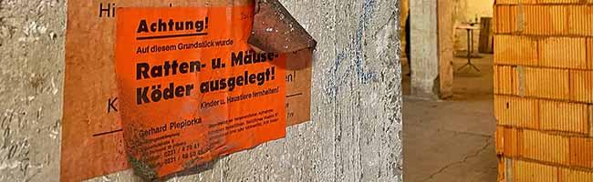 Schädlingsplage verhindern: Ordnungsamt ruft Bürger*innen im Februar zur Rattenbekämpfungsaktion in Dortmund auf